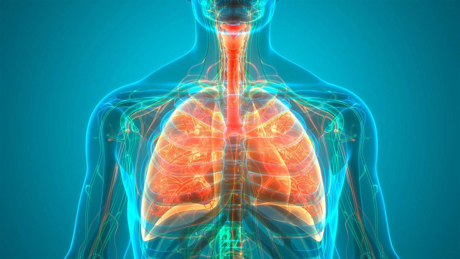 Pulmonology X-Ray